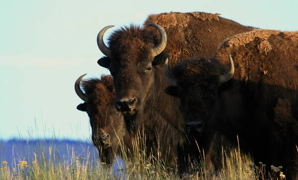 National Bison Range Refuge