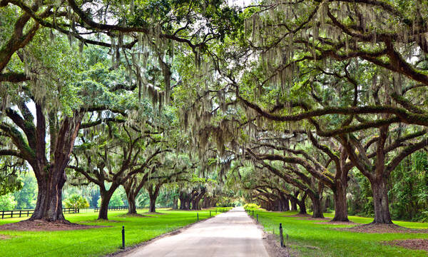Boone Hall Plantation in Charleston South Carolina