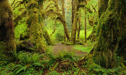Olympic National Park, Hall of Mosses
