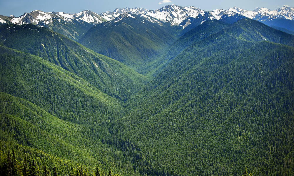 Olympic National Park, Hurricane Ridge