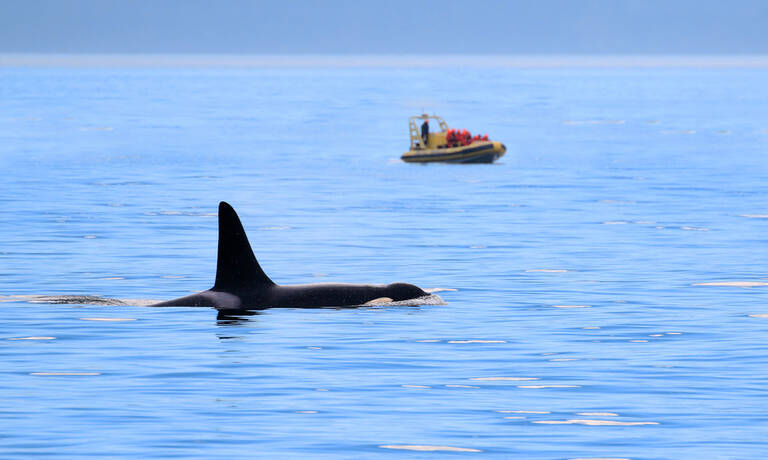 Spot orka's op Vancouver Island