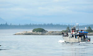 orka viewing whale watching walvisvaart vancouver island johnstrait